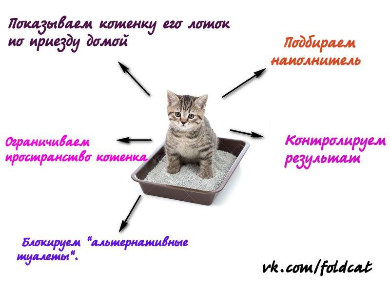 Котенок в доме — пошаговая инструкция для новичков