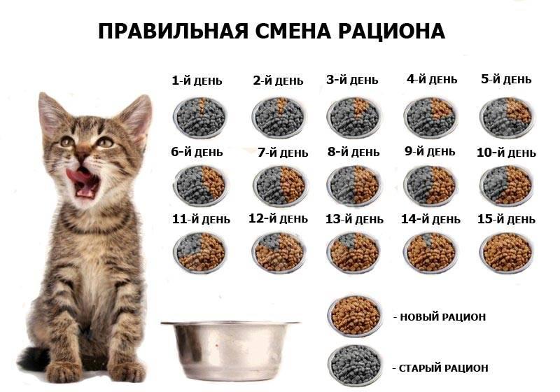 Натуральное питание кошек: нормы, рецепты, отзывы