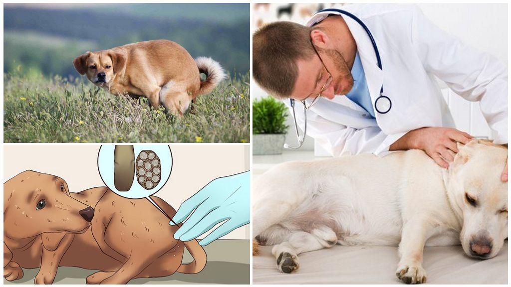 Токсикоз у собак: симптомы   ветмед