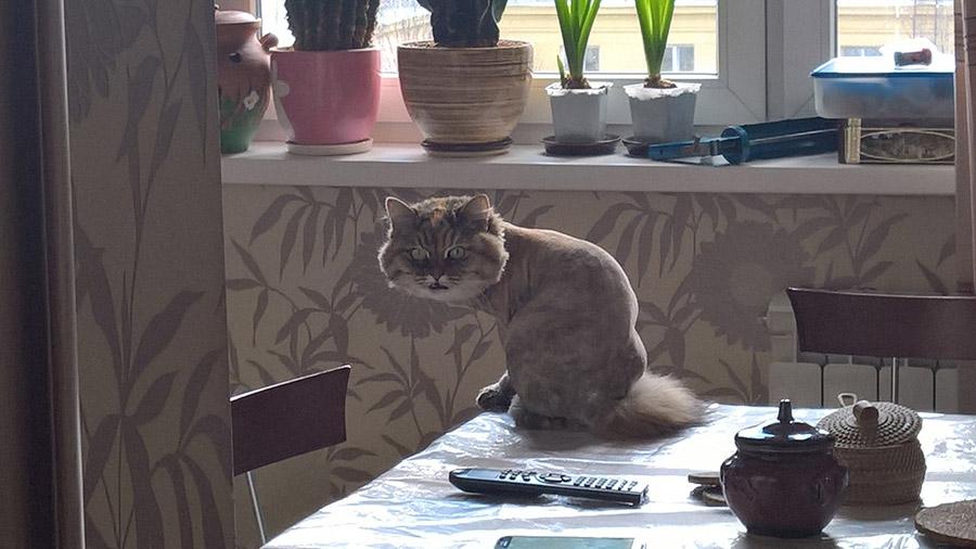 Как отучить кошку гадить: простая инструкция и мой опыт