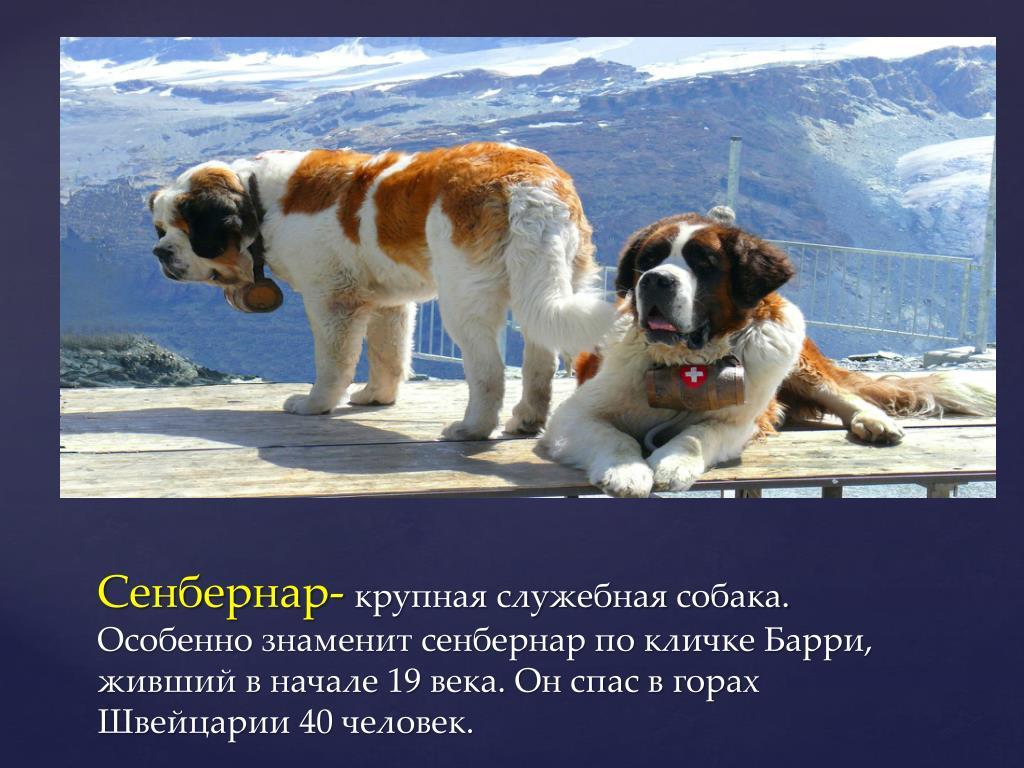 Самые большие собаки в мире: топ-20 пород
