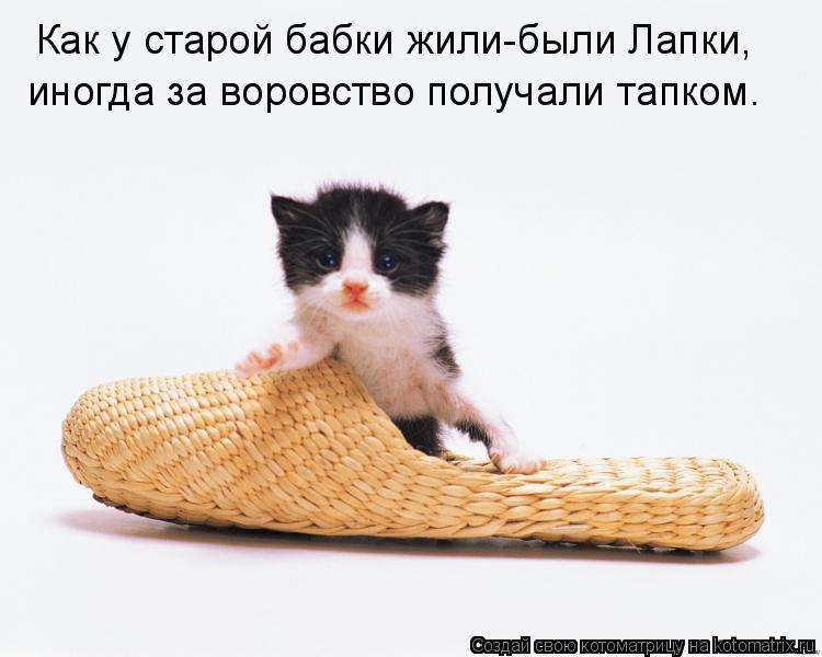 Как научить кошку приносить тапочки