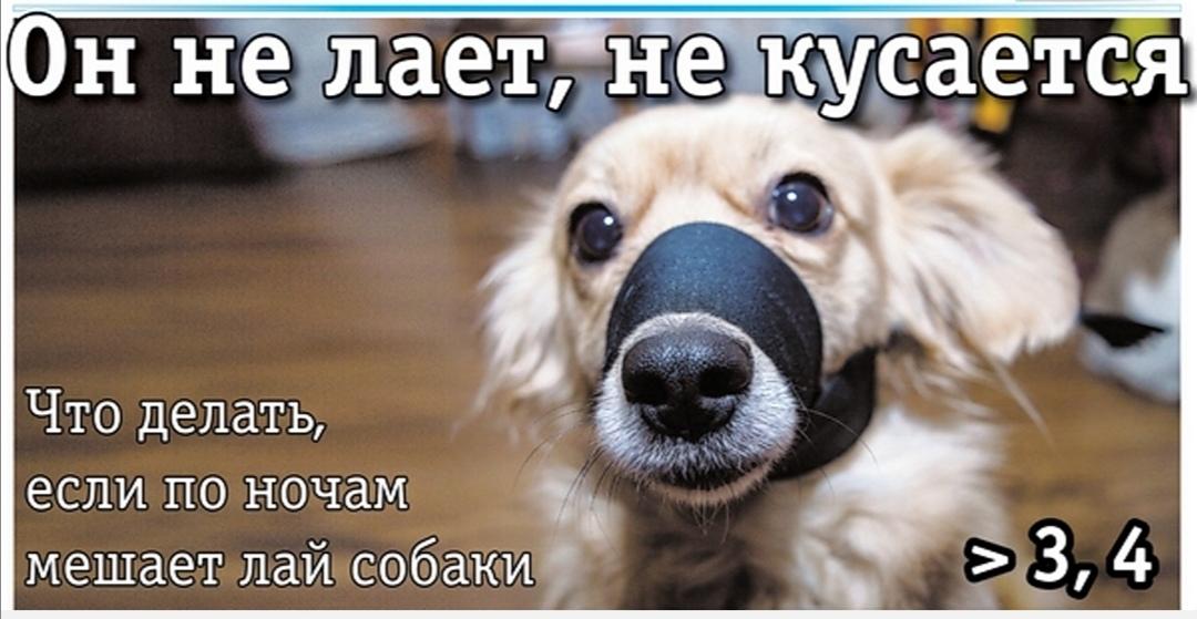 Собака соседа постоянно лает — куда жаловаться?
