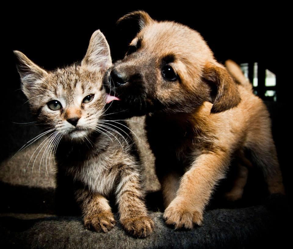 Как правильно и успешно подружить собаку и кошку в одном доме — причины вражды, советы