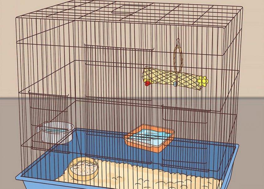 Клетка для волнистого попугая: какую выбрать, размеры, как правильно обустроить, можно ли сделать своими руками, где купить и сколько стоит