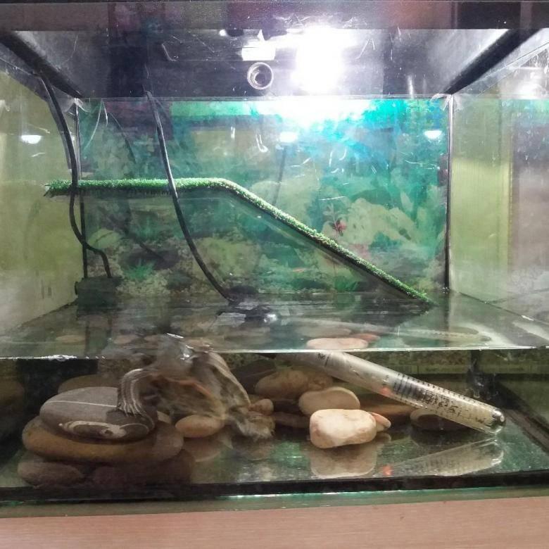 Фильтр в аквариум с красноухой черепахой: выбор, установка и использование
