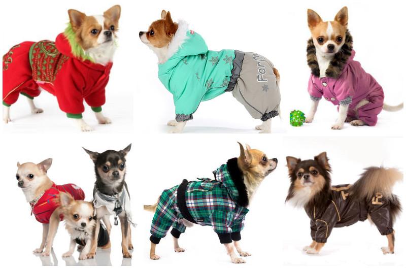 Как правильно выбрать щенка чихуахуа: советы и рекомендации экспертов