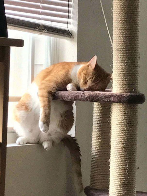 7 вещей, которых кошки боятся больше, чем грозу ипылесос