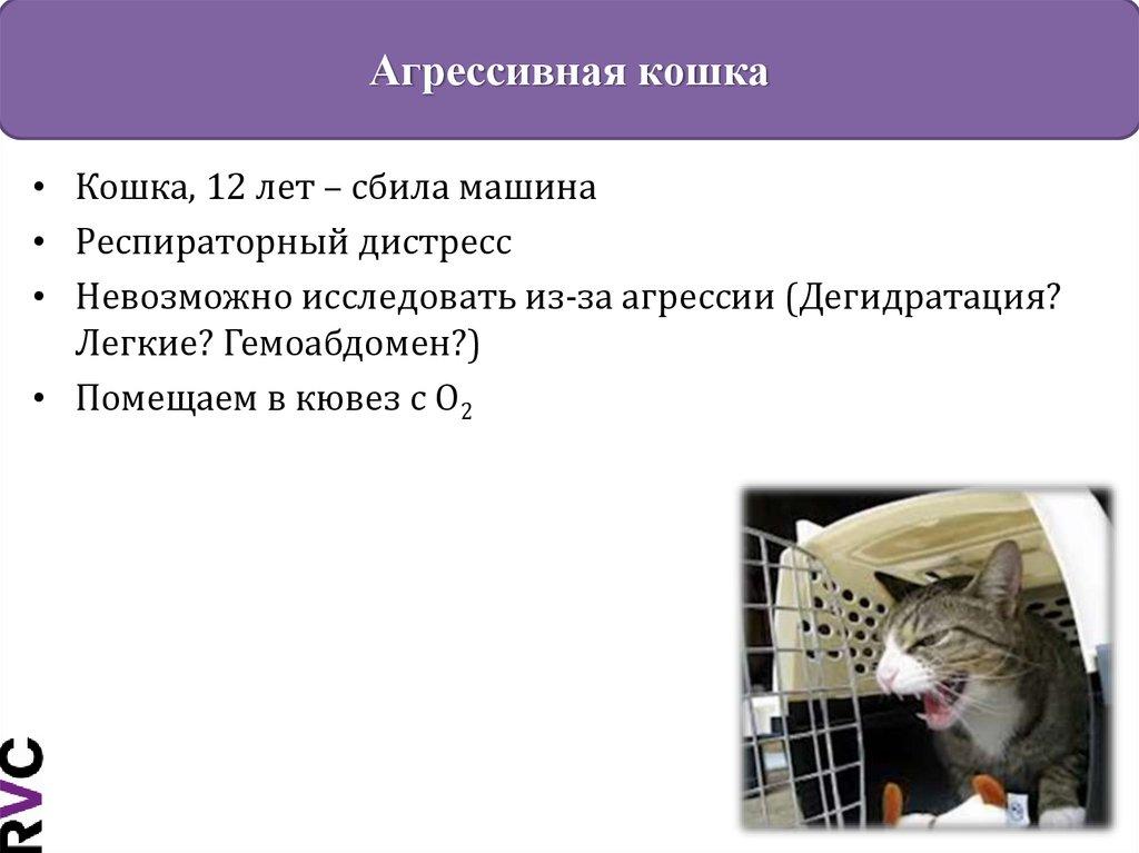 Внезапная агрессия у кошки без причины к хозяину. что делать в домашних условиях? | нвп «астрафарм»