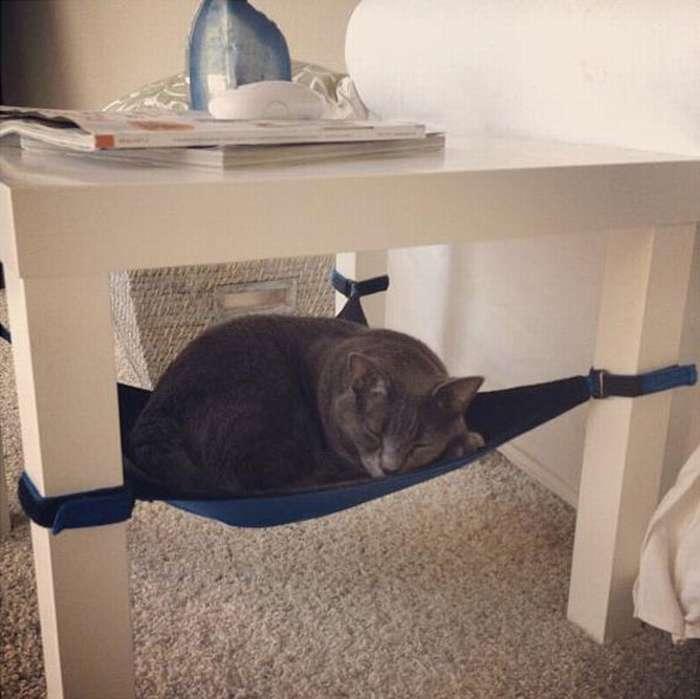 Все лайфхаки для котов, кошек и котят в одной статье.
