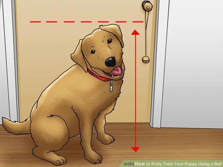 Как приучить собаку ходить в туалет на улицу: проблемы и их решение