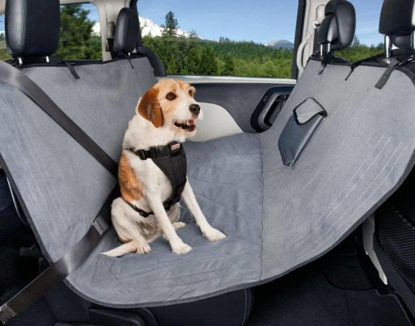 Как перевозить собаку в машине на дальние расстояния без стресса