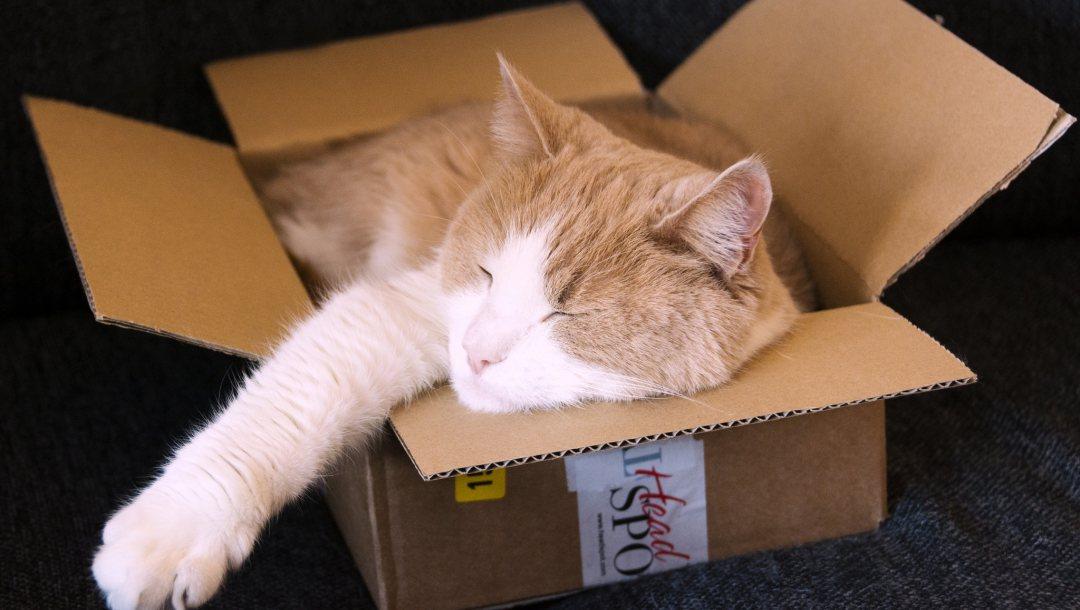 Почему кошки любят коробки: причины, фото и видео