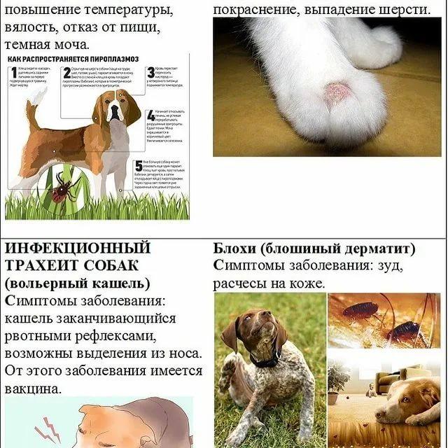 Хпн у кошек — почечная недостаточность у котов: симптомы, лечение