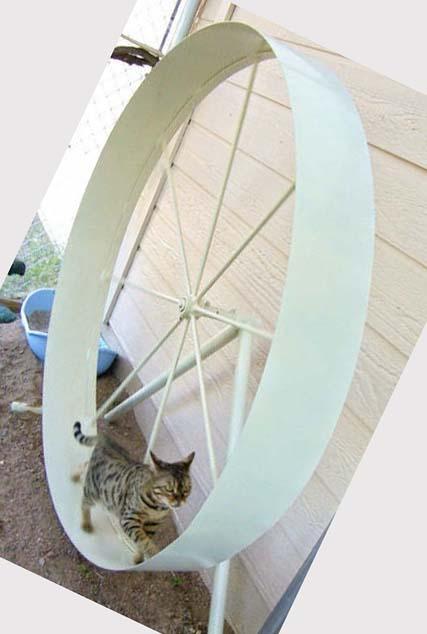 Описание и правила изготовления бегового колеса для кошек
