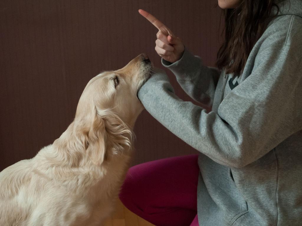 Как правильно наказывать щенка или взрослую собаку