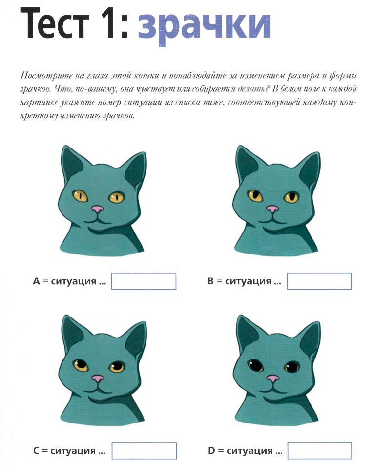 Как понять вашего котенка