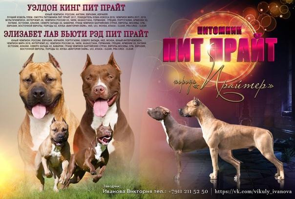 Бедлингтон терьер собака. описание, особенности, уход и цена за породой | sobakagav.ru