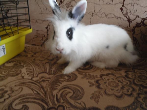 Как красиво назвать кролика и приучить к имени?