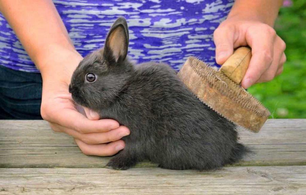 Правила содержания и ухода за карликовыми кроликами