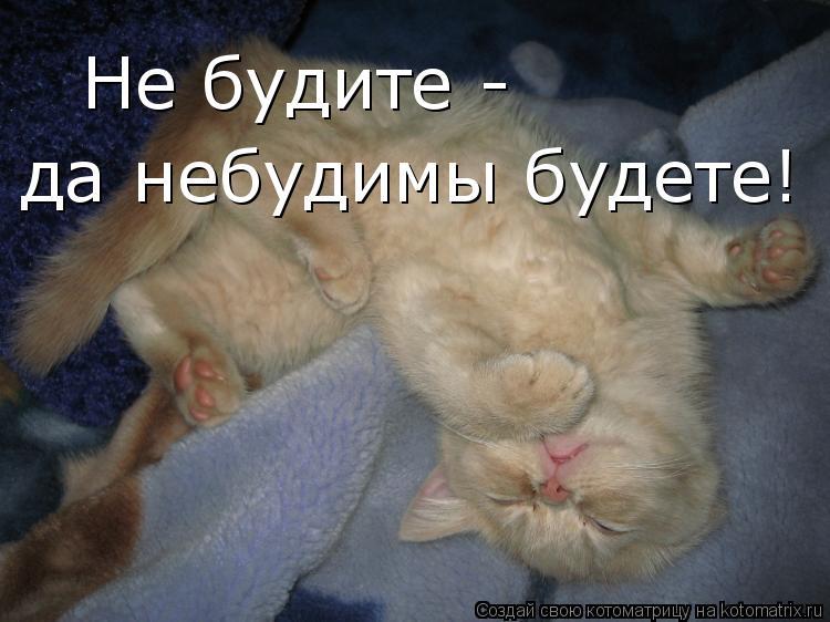11 советов, как приучить кошку спать ночью