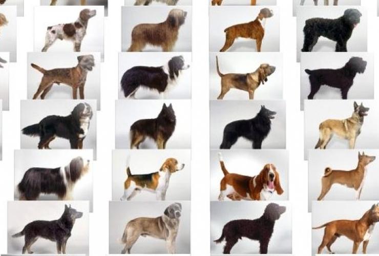 Как узнать какая порода собаки у меня дома