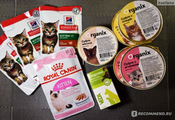 Поедают с удовольствием: 16 лучших сухих кормов для кошек