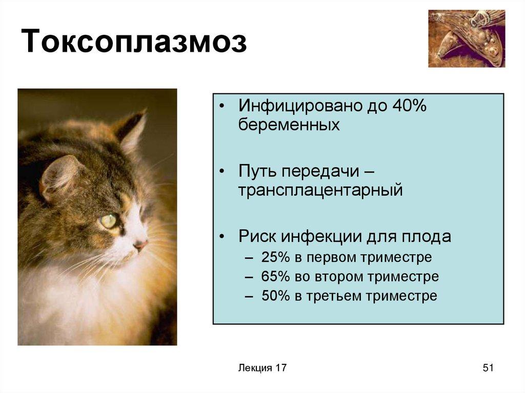 Токсоплазмоз кошек: причины, симптомы, опасность для беременныхветлечебница рос-вет