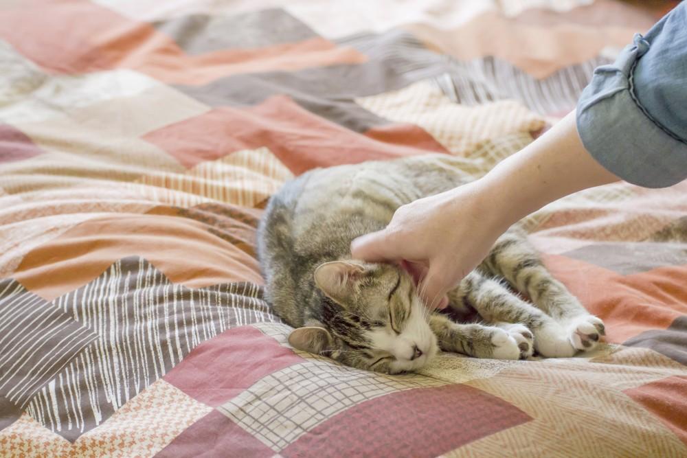 Как отучить собаку спать на кровати в отсутствии хозяина или ночью