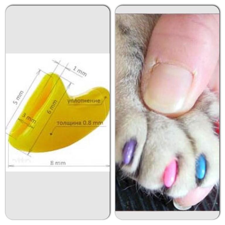 С какого возраста и как наклеить силиконовые ногти для кошек?