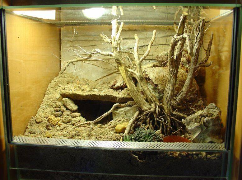 Декорирование террариумов - все о черепахах и для черепах