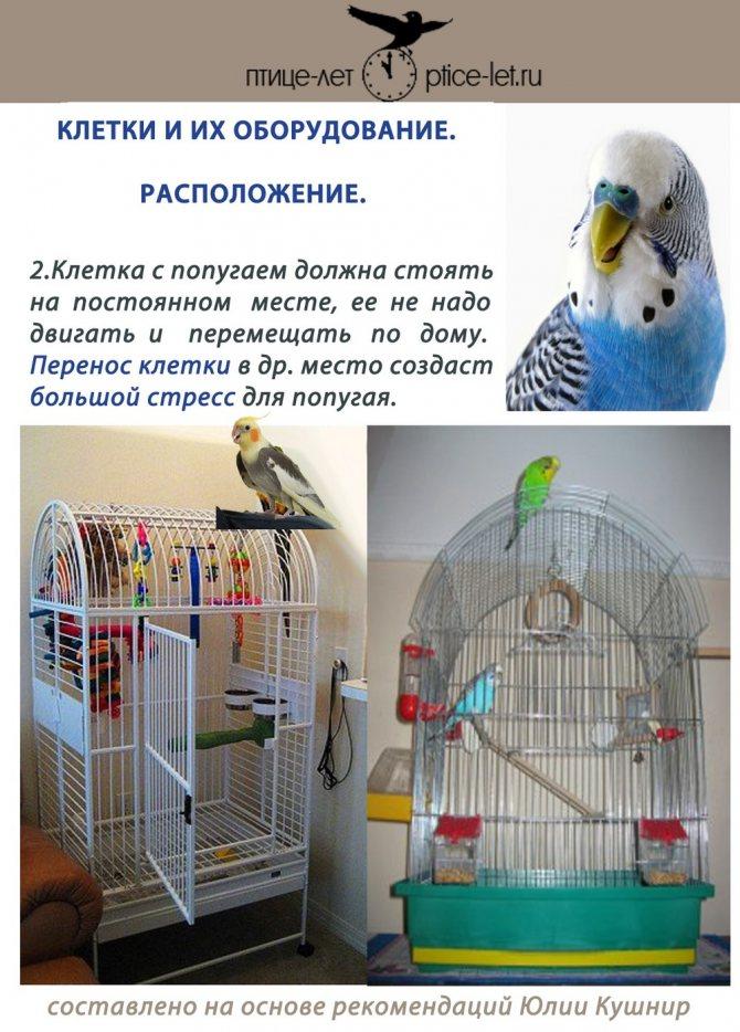 Клетка для попугая своими руками: пошаговая инструкция, как сделать самодельный домик для волнистых птиц, можно ли смастерить из дерева, нужны ли чертежи и схемы