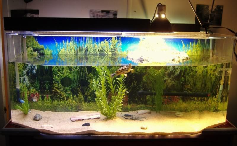 Содержание красноухих черепах в домашних условиях
