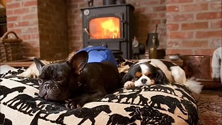 Почему собака писает на диван или кровать – и как ее отучить от этого?