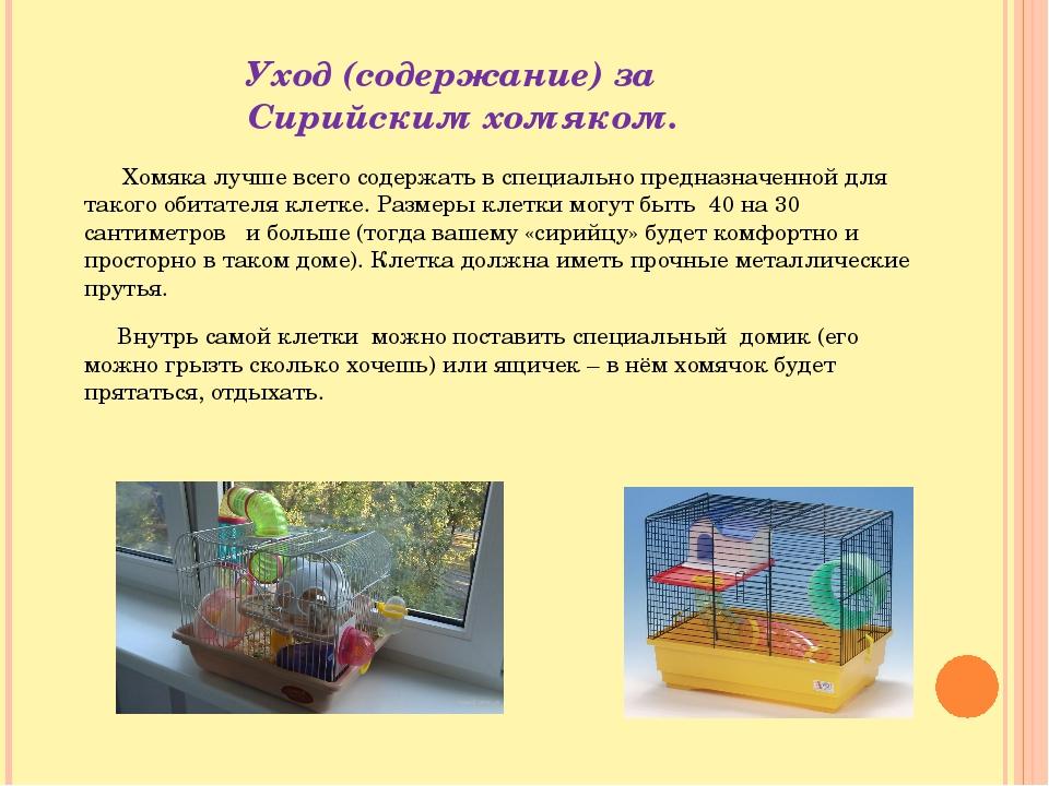 Чем кормить хомяка, что ест хомячок, список продуктов