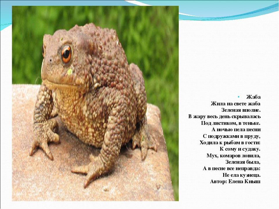 Земляная жаба: чем питается, где обитает, описание и основные виды