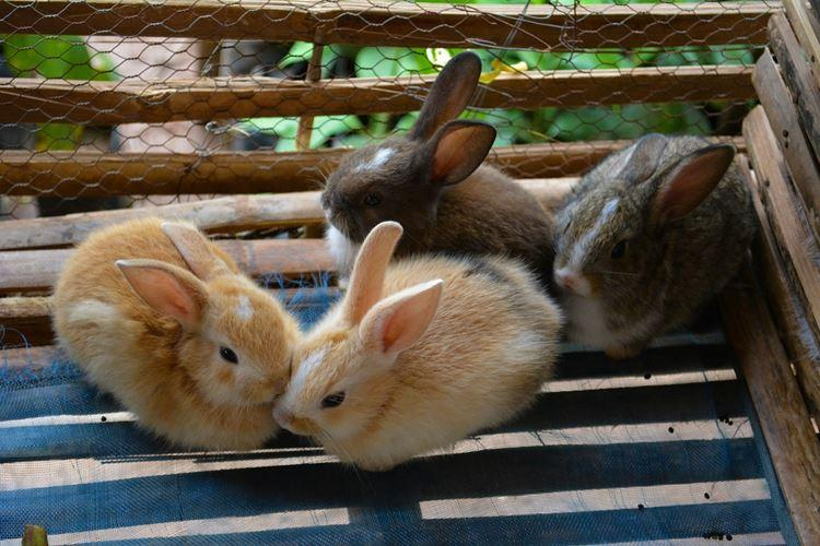 Разведение кроликов в домашних условиях. основные методы содержания   cельхозпортал