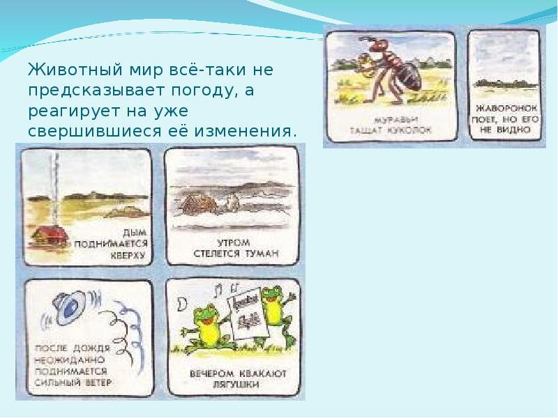 Животные и растения уникальные метеорологи. животные – синоптики. прогноз погоды от домашних питомцев. приметы с рыбками