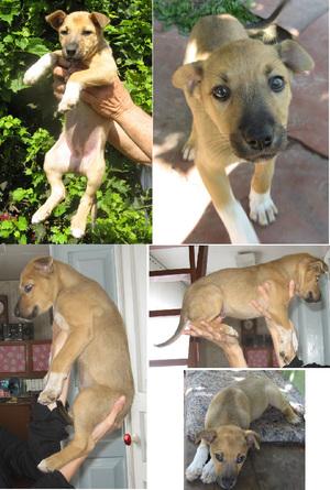Как определить породу собаки, узнать по фото, щенку, пройти тест