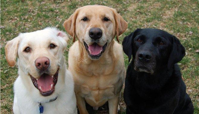 ᐉ породы собак - долгожители - zoovet24.ru