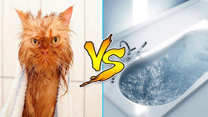 Почему кошки и коты не любят воду?