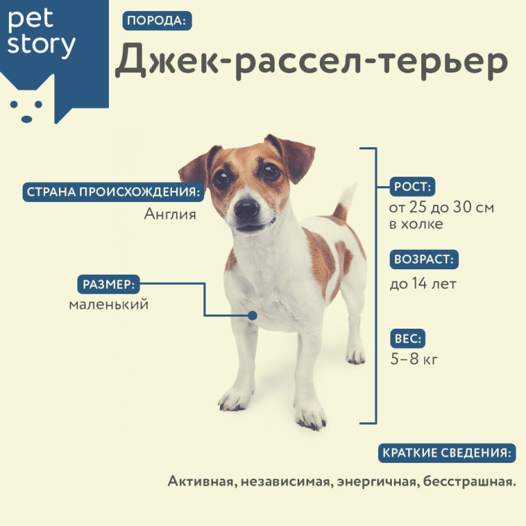 Все породы собак число