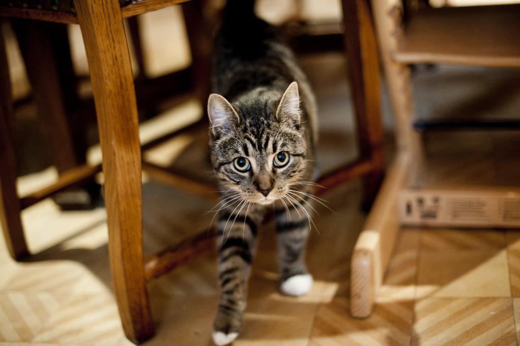 Как правильно наказывать кошку?