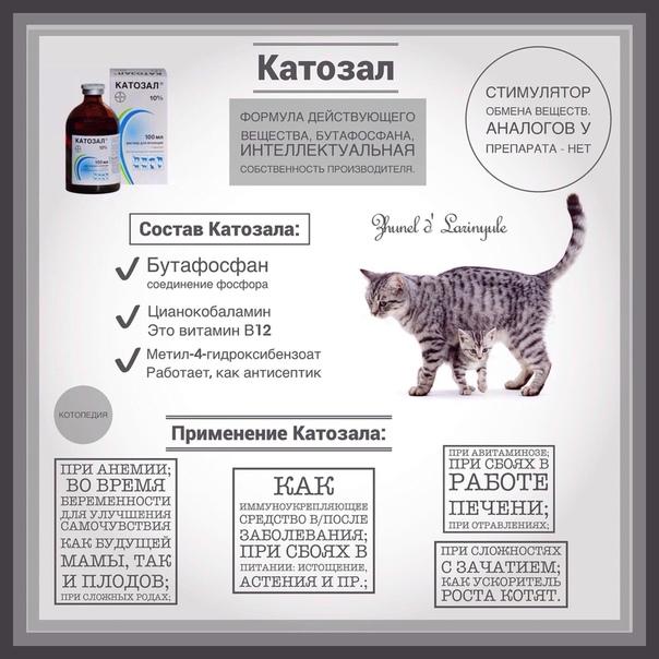 Дексаметазон для кошек- дозировка, инструкция, особенности | зоомедик