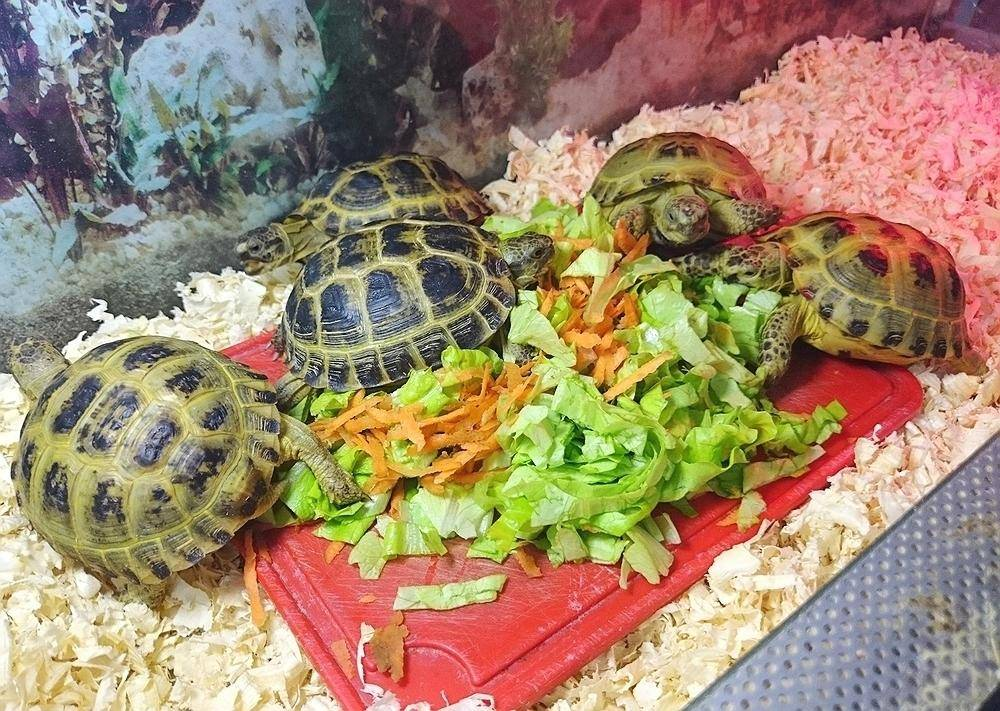 Сухие корма для водных черепах