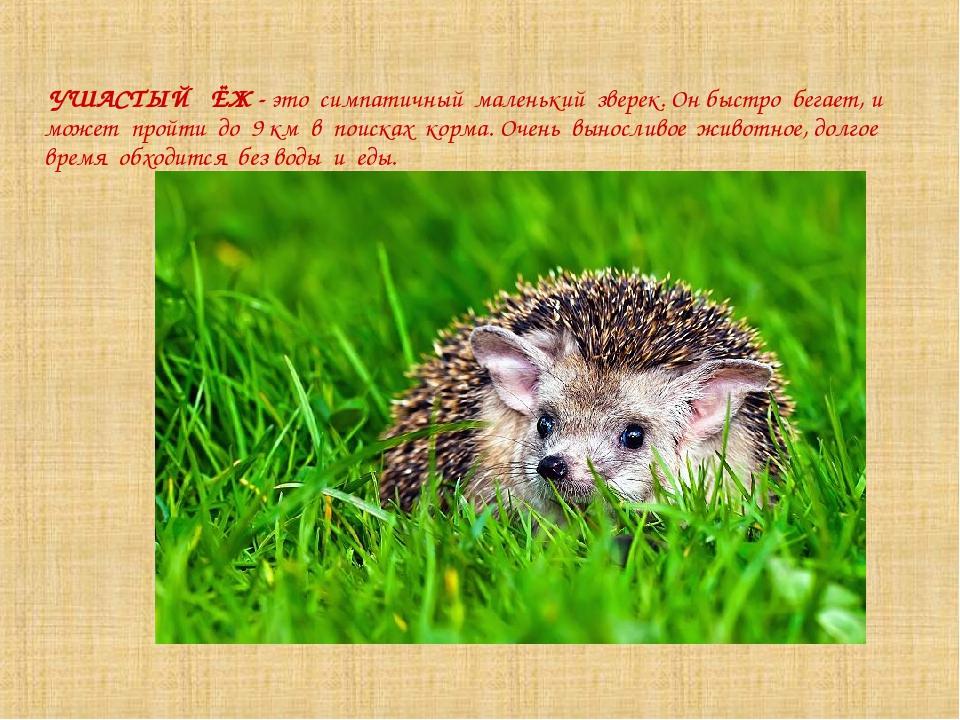Ежи: описание, где живёт, среда обитания, образ жизни