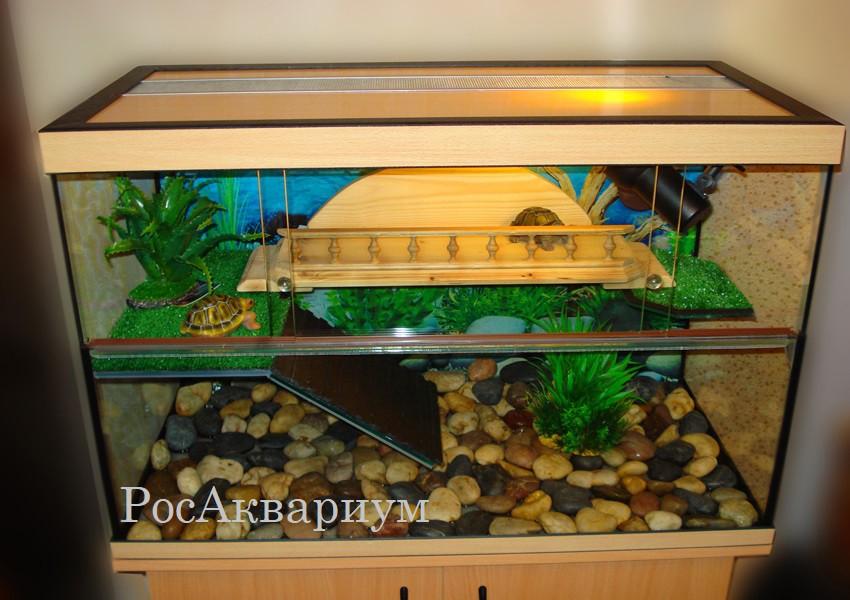 """Как правильно оборудовать акватеррариум для красноухой черепахи   блог ветклиники """"беланта"""""""