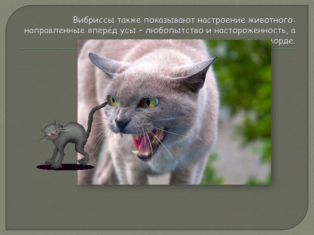 Ваша кошка издает странные звуки? проверьте, что они означают: новости, кошки, эксперты, звук, мяуканье, домашние животные