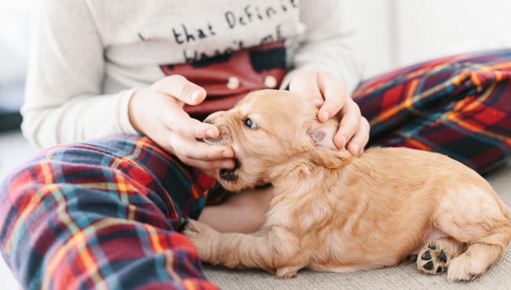 Как отучить щенка кусаться: советы опытных собаководов