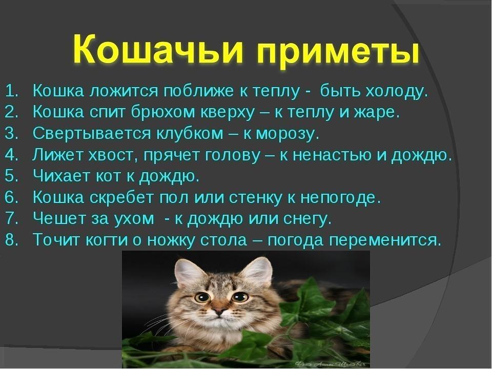 Если кошка пришла в дом, то что это значит - народные приметы